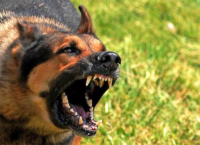 dog-bite-attorney-personal-injury